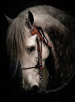 Andalusian Horse by Athena Mckinzie