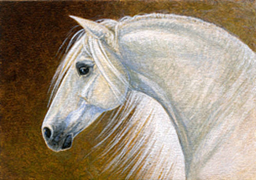 Andalusian Horse Portrait Miniature by Shari Erickson