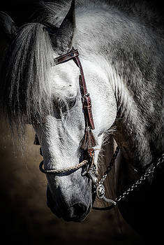 Andalusian III by Athena Mckinzie