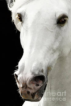 Andalusian Stallion by Melinda Hughes-Berland