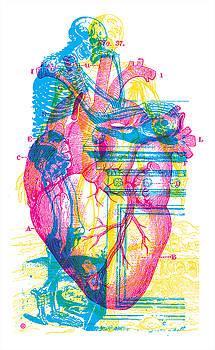 Andreae Vesalii Anatomy 3 by Gary Grayson