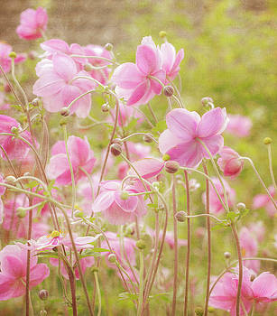 Anemone Dance by Diane Fifield