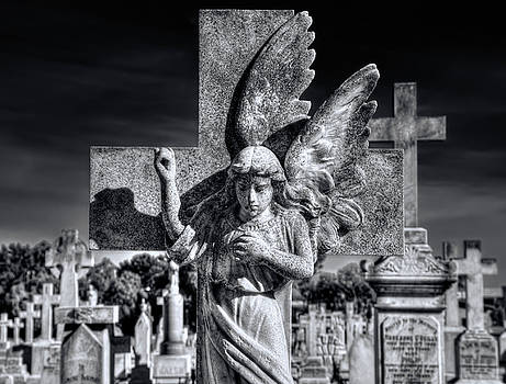 Angel In The Morning by Wayne Sherriff