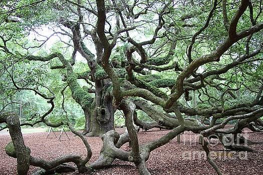 Angel Oak 1 by Dodie Ulery