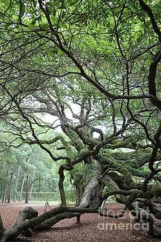 Angel Oak 2 by Dodie Ulery