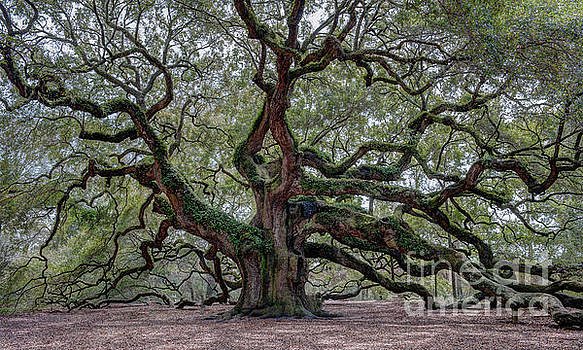Dale Powell - Angel Oak Tree of Life
