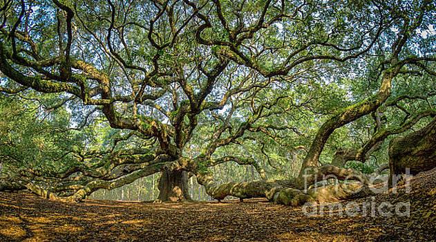 Angel Oak - Fisheye by David Smith