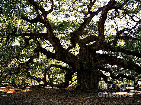 Susanne Van Hulst - Angel Oak in November
