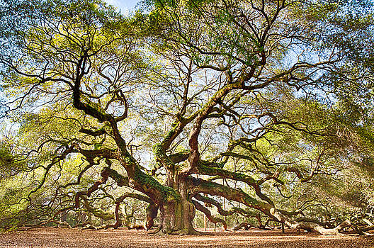 Angel Oak in Spring by Patricia Schaefer