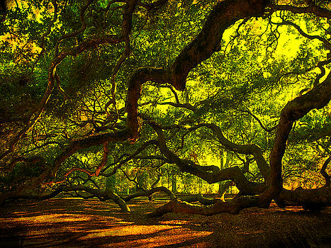 Susanne Van Hulst - Angel Oak Limbs 2