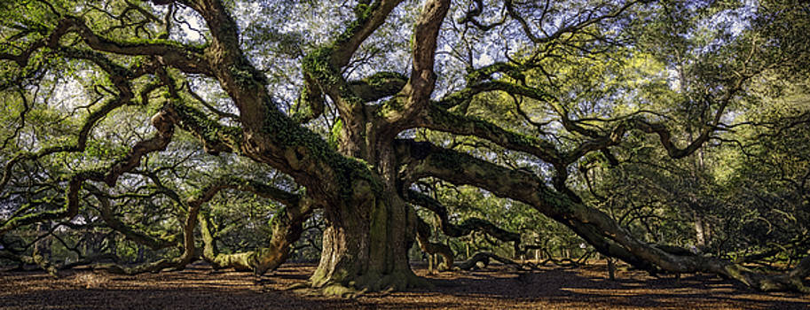 Angel Oak by Michael Donahue