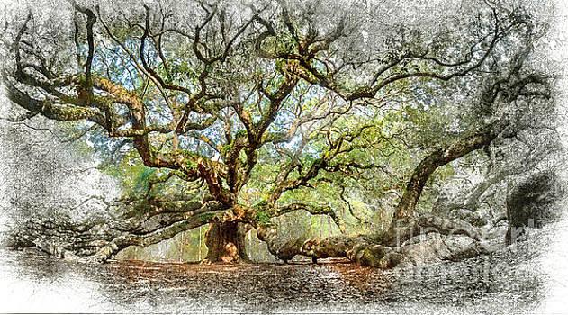Angel Oak Mixed Media by David Smith