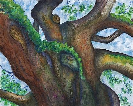 Angel Oak Take 4 by Barb Toland