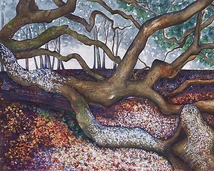 Angel Oak Take 5 by Barb Toland