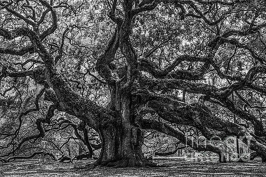 Dale Powell - Angel Oak Tree Americana