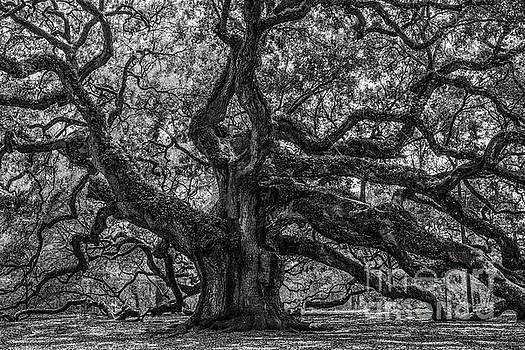 Dale Powell - Angel Oak Tree Americana