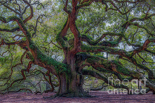 Dale Powell - Angel Oak Tree Deeply Rooted History