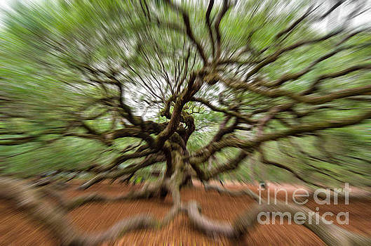 Dale Powell - Angel Oak Tree in Motion