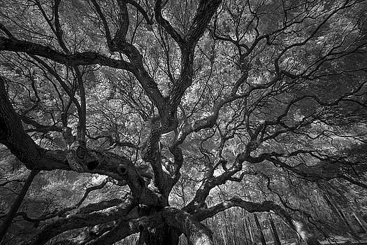 Angel Oak Tree by Mark Wagoner