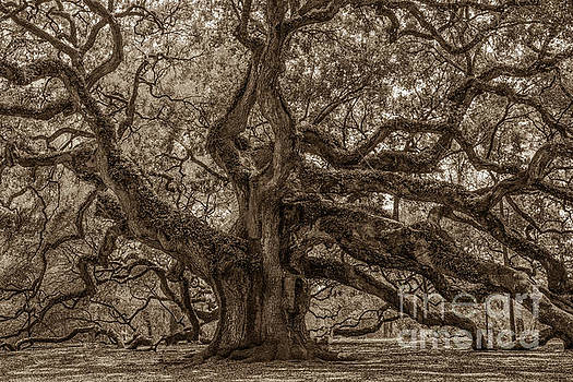 Dale Powell - Angel Oak Tree Patina
