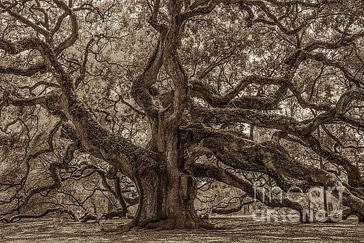 Dale Powell - Angel Oak Tree Patina