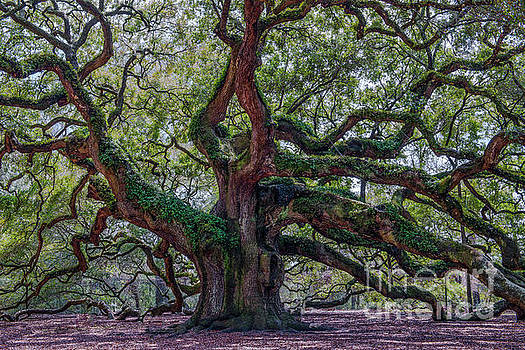 Dale Powell - Angel Oak Tree Salt of the Earth