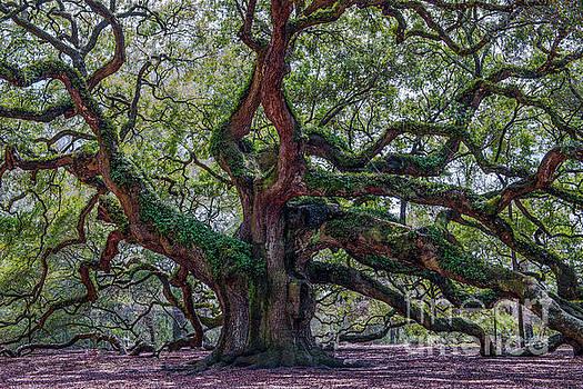 Dale Powell - Angel Oak Tree Salt of the Earth