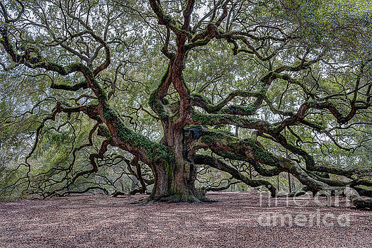 Dale Powell - Angel Oak Tree Splendor