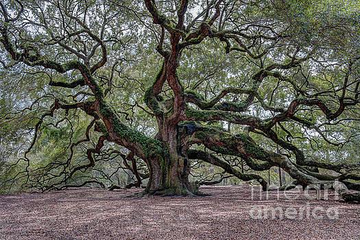 Dale Powell - Angel Oak Tree Splendor