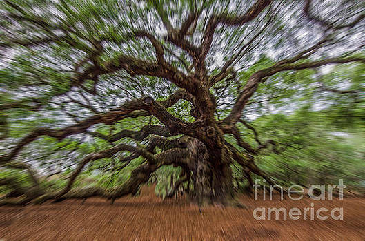Dale Powell - Angel Oak Tree Zoom