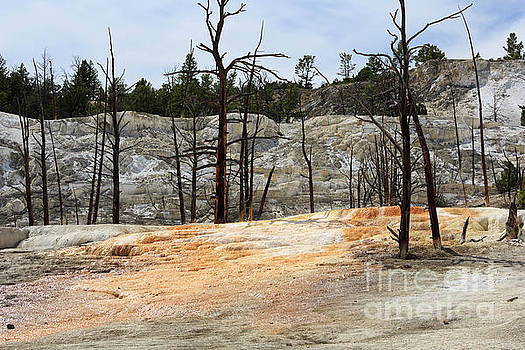 Angel Terrace at Mammoth Hot Springs Yellowstone National Park by Louise Heusinkveld