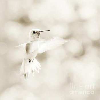 Angel Wings by Beth Riser