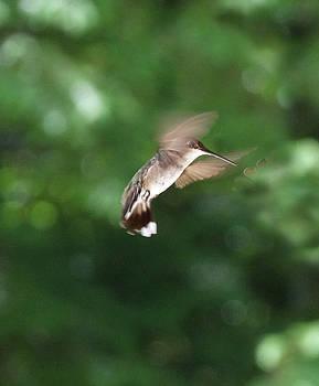 Angel Wings by Mary Vinagro
