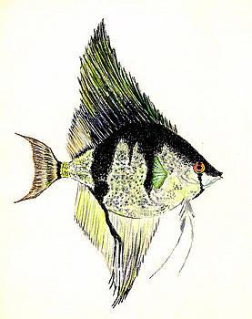 Angelfish by Michael Vigliotti