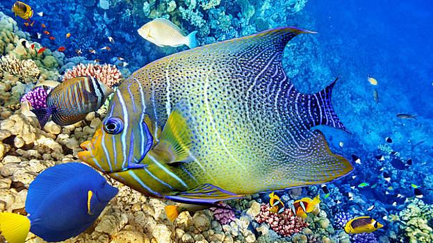 Angelfish Queen by Marvin Blaine