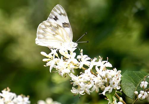 Karen Scovill - Angelic Butterfly