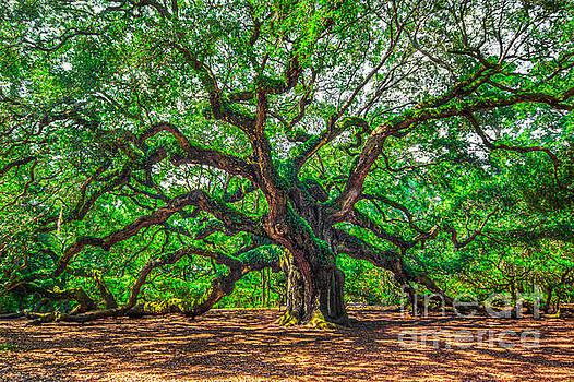 Angle Oak by Matthew Trudeau