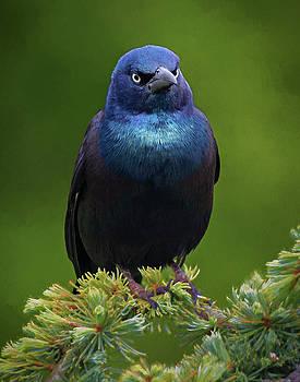 Angry Bird by Jerry Deutsch