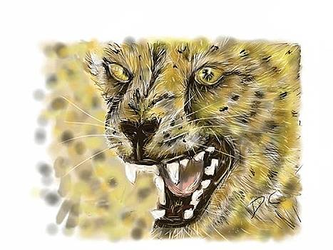 Angry cheetah by Darren Cannell