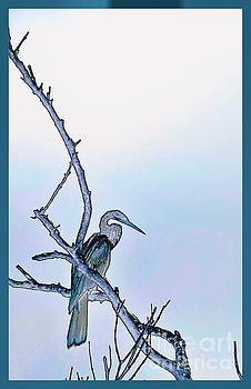 Anhinga in Blue by Pamela Blizzard