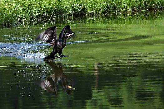 Anhinga Landing by Bibi Rojas