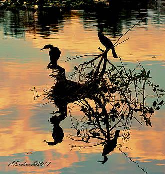 Anhingas Reflecting by Allan Einhorn