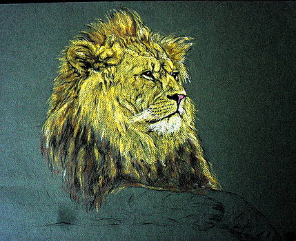Animal 21- Lion by Mohd Raza-ul Karim