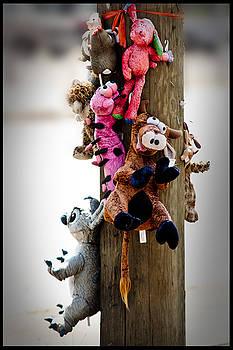 Animal Abuse by Don Krajewski