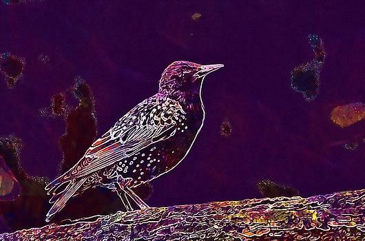 Animal Avian Bird Feathers Nature  by PixBreak Art
