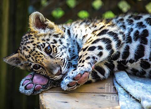 Animal - Jaguar - Baby Penny by CJ Park