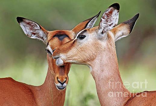 Animal love, Africa wildlife by Wibke W