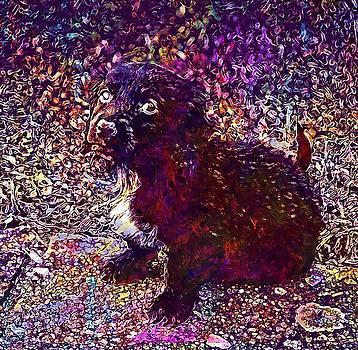 Animal Mammal Dog Puppy Pet Cute  by PixBreak Art
