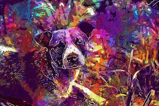 Animal Nature Dog Canine Mammal  by PixBreak Art