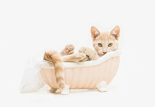 Animal Rescue Portraits- Buddy in the Bath by Andrea Borden